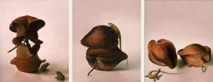 von-artens-semillas-findlay